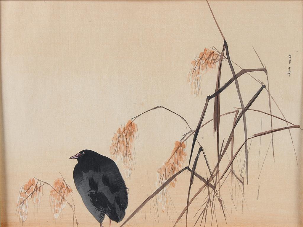 watanabe seitei (1851-1918) Moorhen in the rice