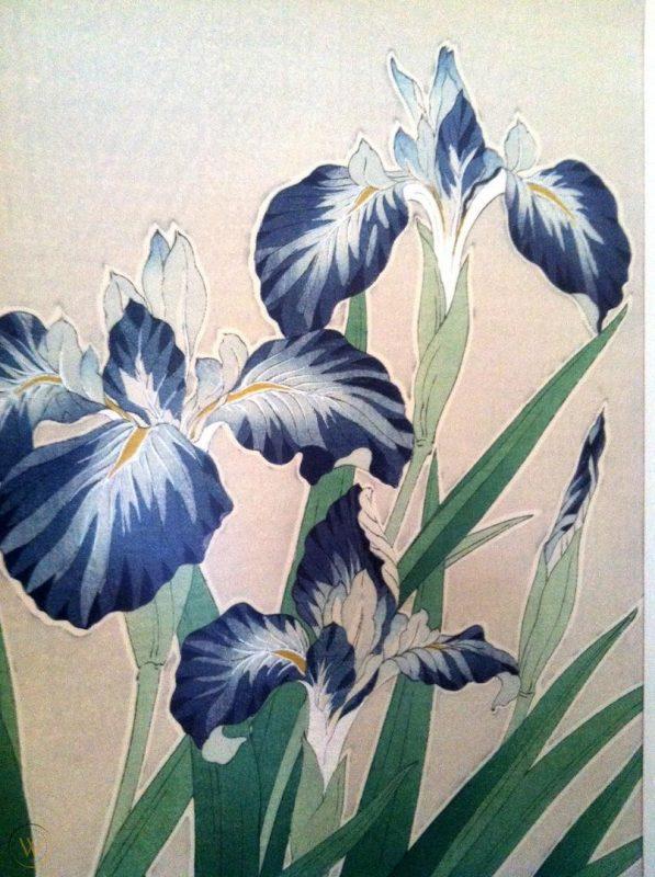 kawarazaki-shodo-iris-japanese_1_5a633f2308e666db85df86d0764dd2a0