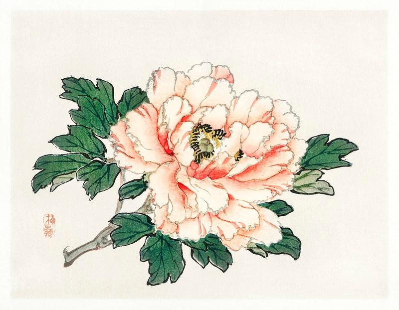 Kono Bairei pink rose